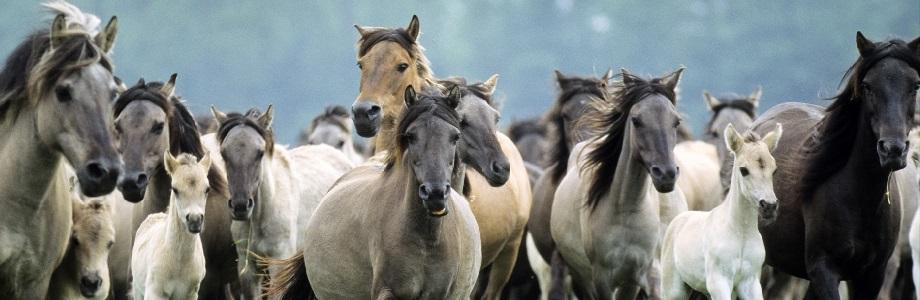 veterinarians-involved